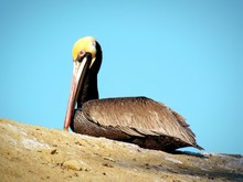 Low Angle View Of Pelican Sitting On Rock Against Sky