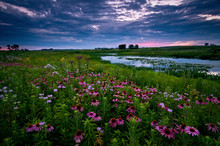 Clearing Storm Clouds At Sunset Over A Prairie Landscape Of Blooming Native Wildflowers.