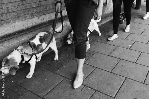 Women With Dogs Walking On Street Fotobehang