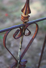 Old Rusty Iron Gate With Flowers