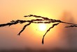 Close-up Of Silhouette Wet Plant During Sunrise