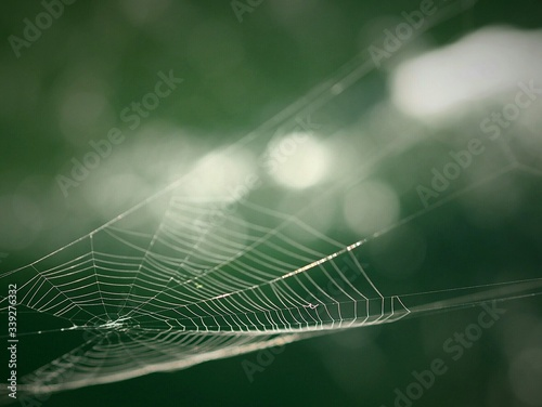 Fotografie, Obraz Close-up Of Spider Web