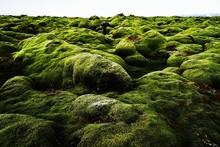 Moss Covered Rocks On Landscape