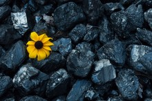 High Angle View Of Yellow Flower On Coals