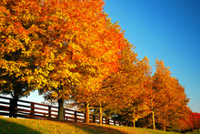 Autumn Trees Line A Country Ro...