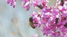 Bee Hanging Onto Tiny Flowers ...
