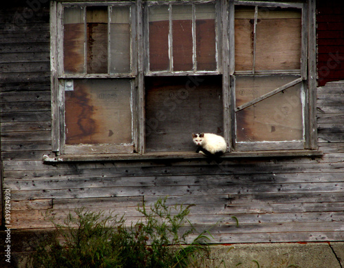 Valokuva Cat Sitting On Window Of Abandoned House