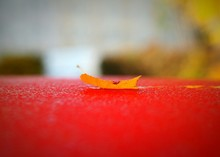 Yellow Leaf Fallen On Red Surface
