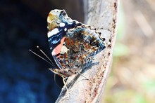 Close-up Of Butterfly On Rusty Metal