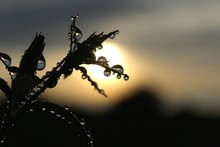 Close-up Of Silhouette Plant With Drops Against Sky