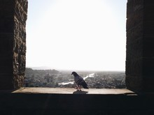 Pigeon Perching On Window Sill Against Sky