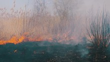 Fire In The Forest. Burning Dry Grass, Trees And Reeds. Wildfire. Slow Motion.