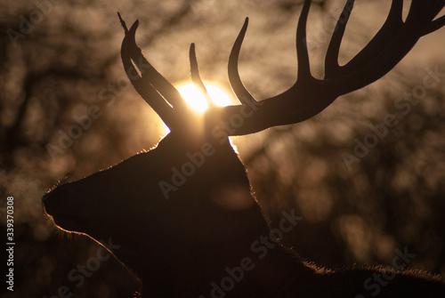 Photo Red Deer In Richmond Park