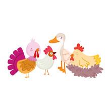 Farm Animals Poultry Goose Duck Rooster Turkey Hen And Chicken Cartoon