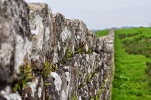 Close-up Of Moss Growing On Hadrians Wall