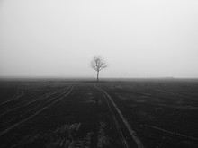 Lone Tree On Landscape Against Clear Sky