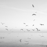Flock Of Birds Over Sea Against Sky - 339383586