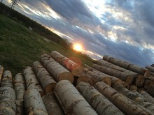 High Angle View Of Logs On Field Against Cloudy Sky At Sunset