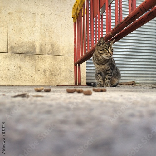 Canvas-taulu Cat Sitting On Street By Metallic Barricade