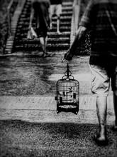 Rear View Of Man Carrying Birdcage Walking On Street