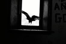 Pigeon By Window On Graffiti Wall