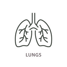 Human Lungs Line Icon On White...