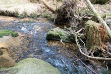 Pure Water Stream In Forest