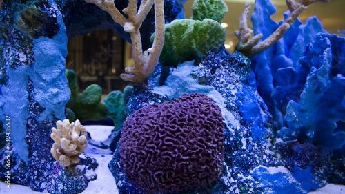 Foto Artificial Corals In Fish Tank