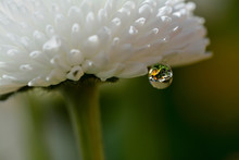 Gentle Reflection On The Water Droplets Macro Photo