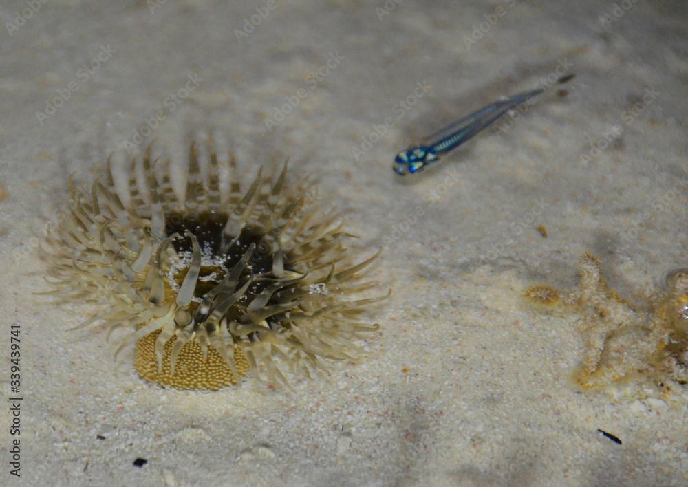 Fototapeta Ukwiał - podwodny świat