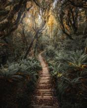 Pathway In New Zealand Tropica...