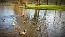 Ducks Swimming In Pond At Vondelpark
