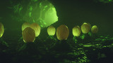 Fototapeta Perspektywa 3d - Concept art cave with an alien nest. Inside a dark strange wet stone cave with mysterious alien eggs. Sci-fi wallpaper. Underground rock tunnel with slime with green volumetric light. 3d illustration