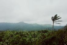 High Angle Shot Of Lush Landscape