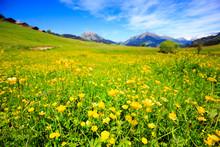 春の草原。スイス