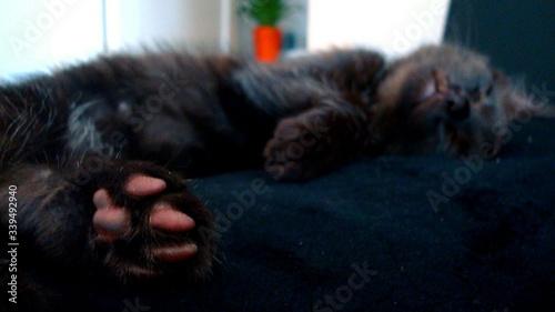 Fotografie, Tablou Close-up Of Sleeping Black Cat Paw