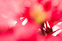 Full Frame Shot Of Defocused Red Flowers