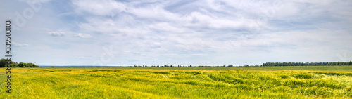 Fotomurales - Scenic view of Wheat Field and bright blue sky with cumulus and cirrus. Rural summer Landscape. Beauty nature, Agriculture and seasonal Harvest time. Cultivation cereals. Agribusiness. Panoramic view
