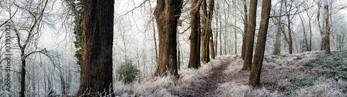 Weg im Winterwald Canvas Print