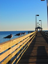 Seagulls Perching On Pier Railing Against Sky