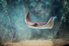Electric Stingray Fish Floats ...