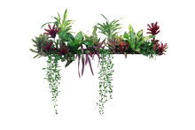 Tropical Plants Bush Decor (hanging Dischidia, Bromeliad, Dracaena, Begonia, Bird's Nest Fern) Indoor Garden Houseplant Nature Backdrop, Vertical Garden Wall Planter Isolated On White, Clipping Path.