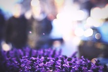 Purple Flowers At Night