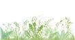 grüne Gräser, Pflanzen und Kräuter