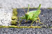 Close-up Of Grasshopper On Road