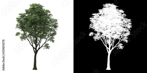 Fotomural Left view of tree (Tilia) png with alpha channel to cutout 3D rendering