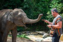 Man Feeds A Male Asian Elephan...