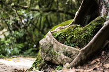 Close-up Of Moss Covered Tree Root In Forest