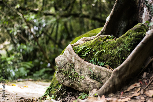 Fototapeta Close-up Of Moss Covered Tree Root In Forest