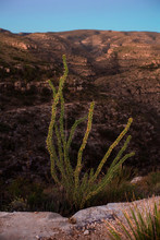 Cactus Overlooking Desert Cany...